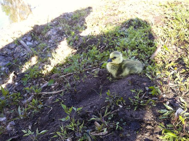 Jack 7 gosling shadows