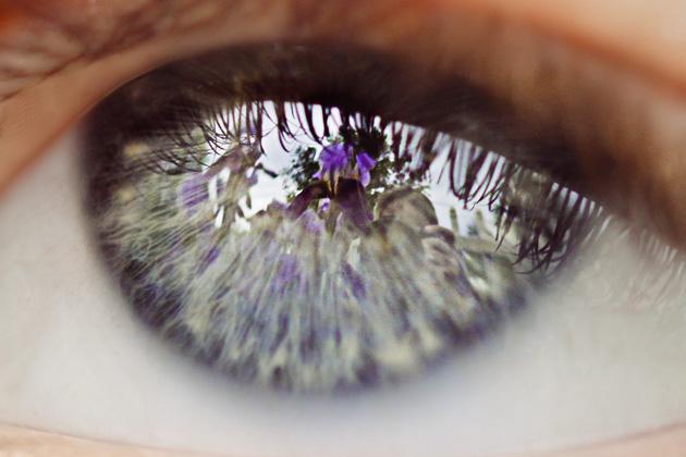 iris eye 1b