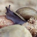 snail 10 dark