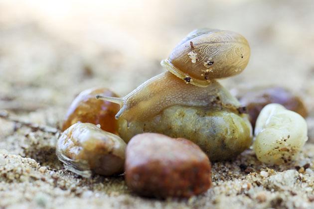 snail 2b