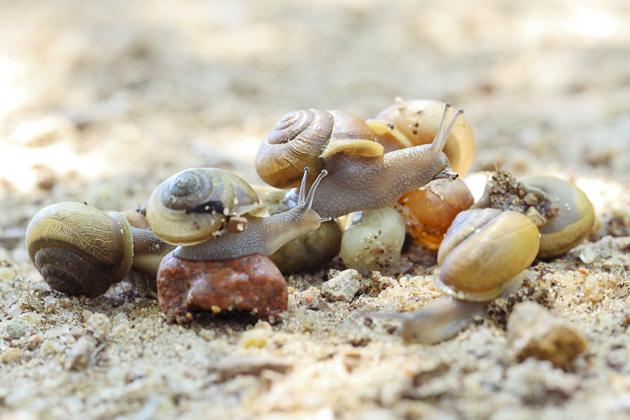 snail 4 group