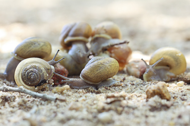 snail 5 group