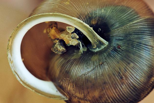 snail 6 shell