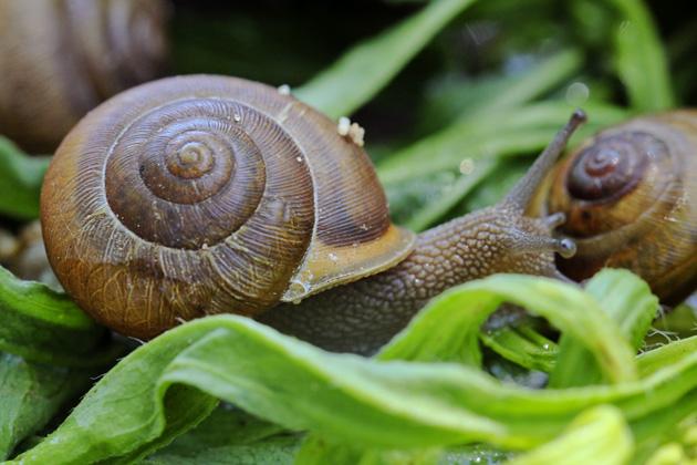 snail 7 in grass
