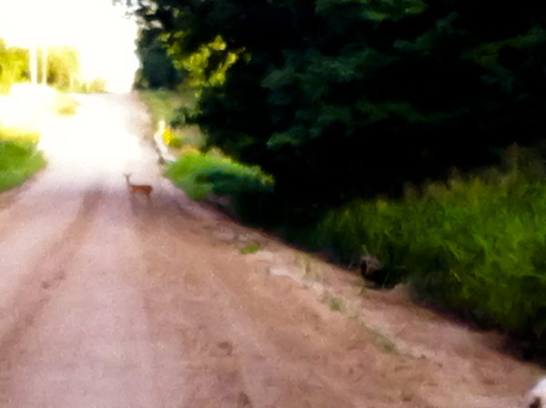deer run 3