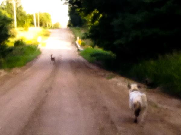 deer run 4