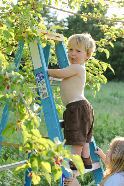 child-on-ladder-by-fruit-tree