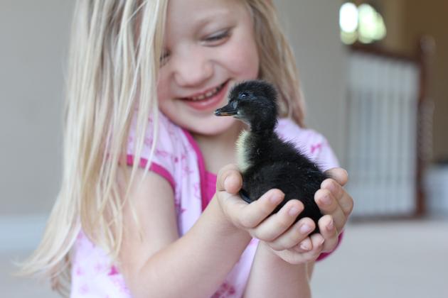 girl-holding-duckling