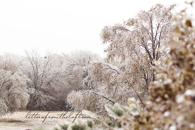 ice storm 1 hello winter