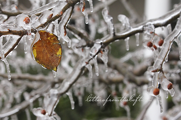 ice storm 15 leaves hanging on