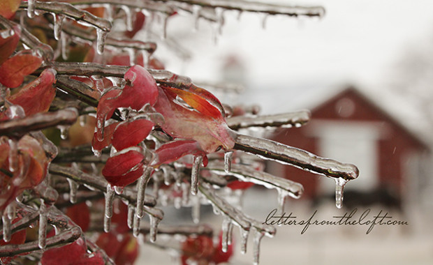 ice storm 19 pointed to barn