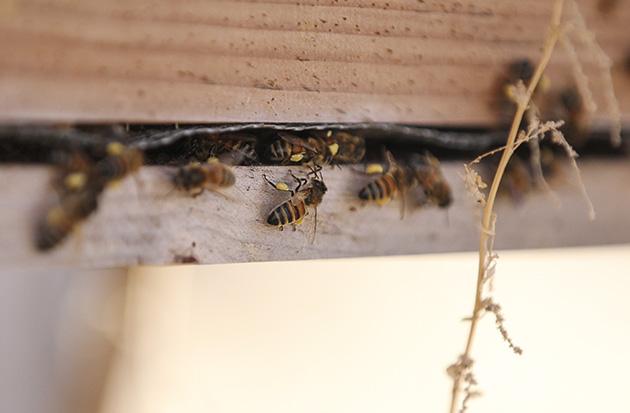 farm bees 1
