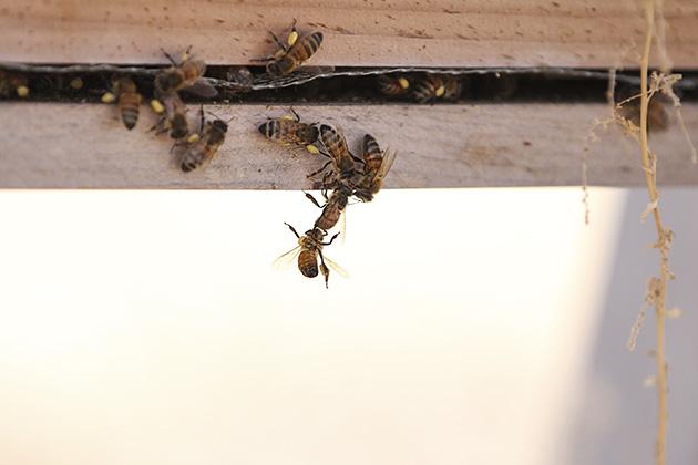 farm bees 2