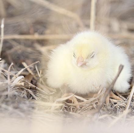 random chick pic 1