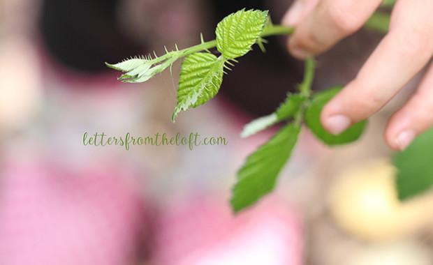 blog wild blackberry leaves